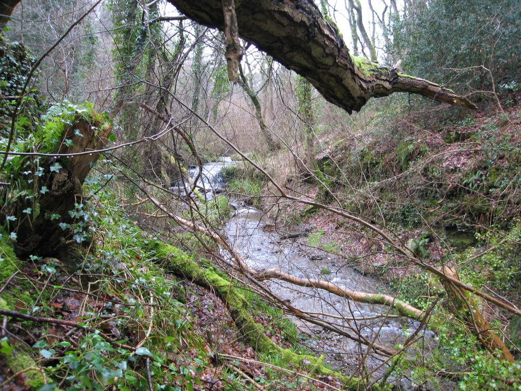 Afon Garth Walks