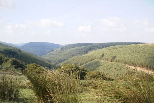 Cwmcarn Forest Walk